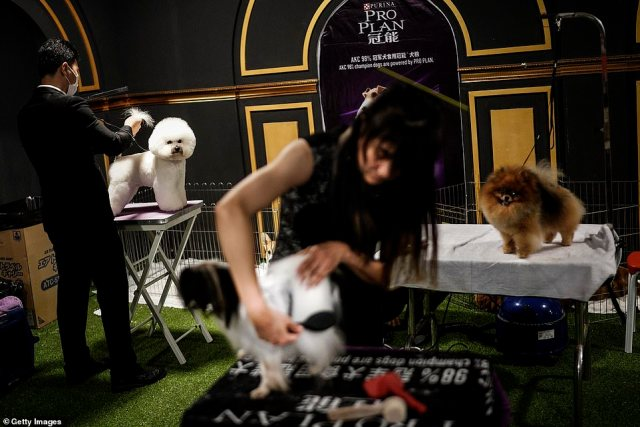 Pet owners in Wuhan have rushed to compete in a high-end dog show with their well-groomed kennels, a sign of life returning to normal in the former coronavirus epicentre despite the pandemic