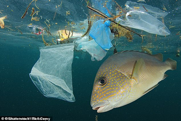 The measures include a pledge to re-double efforts to slow down deforestation, eliminate unregulated and unsustainable fishing practices and stop plastic being dumped into the ocean by 2050 (file image)