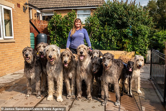 Claire said that lots of local pubs around her house were dog-friendly, which meant some of her wolfhounds could come with her on her outings and socialise
