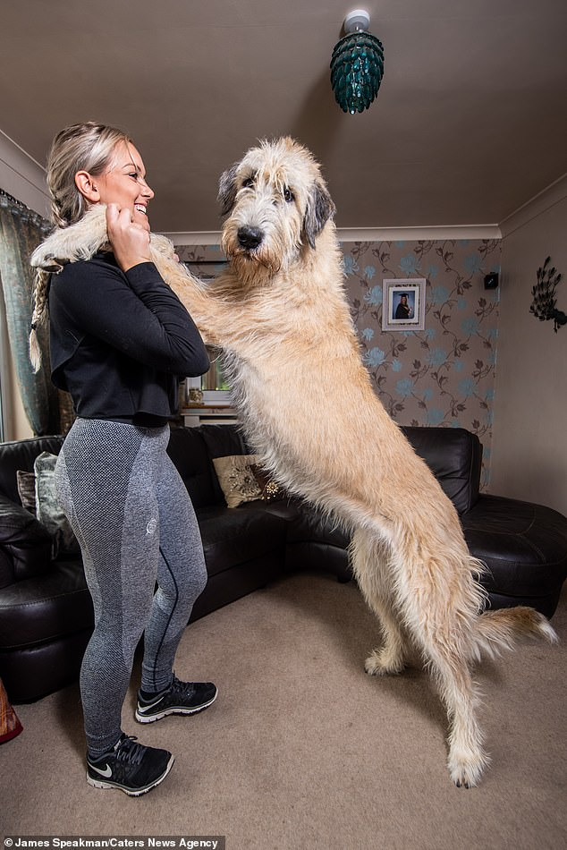 Eve standing up with Wolfhound Nell. Standing up, the dog can be as tall or even taller than a human