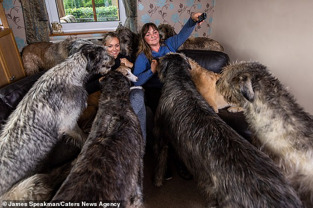 The couple, who breed Irish Wolfhounds professionally, spend £200 on food and treats for their pets