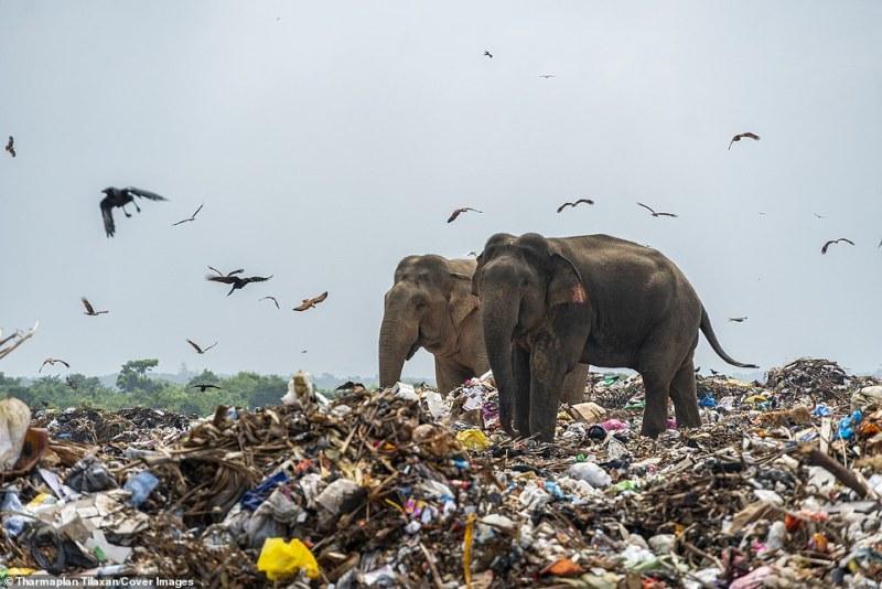 Resíduos de distritos incluindo Sammanthurai, Kalmunai, Karaitheevu, Ninthavur, Addalachchenai, Akkaraipattu e Alaiyadi Vembu são despejados lá
