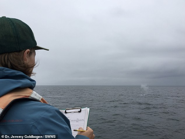 This photo shows first author William Oestreich observing whales aboard the off the coast of Monterey Bay, California