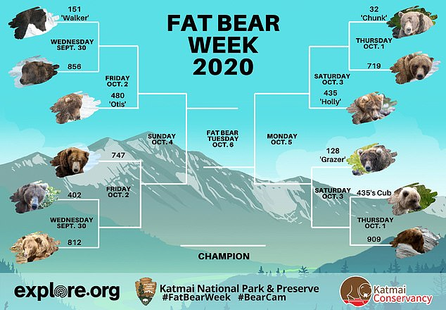 Fat Bear Week is an annual online tournament which takes place each October, requiring people to choose which Katmai National Park bear has put on the most weight over the summer. This year's schedule is pictured