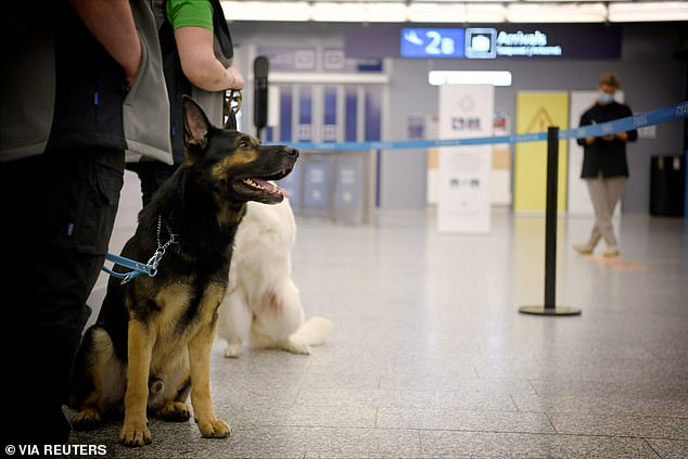 Finland is currently using coronavirus sniffing dogs at Helsinki airport as part of a four-month trial of an alternative testing method that could become a cost-friendly and quick way to identify infected travelers
