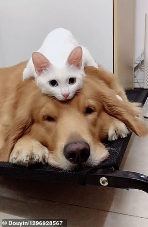 Best furry friends are always next to each other, even when sleeping