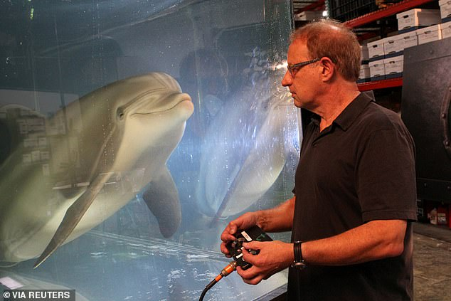 Edge Innovations, a US animatronics company, has built a a life-like robotic dolphin that mimics the animal's movements and sounds - creating the illusion of a live dolphin that humans can interact with