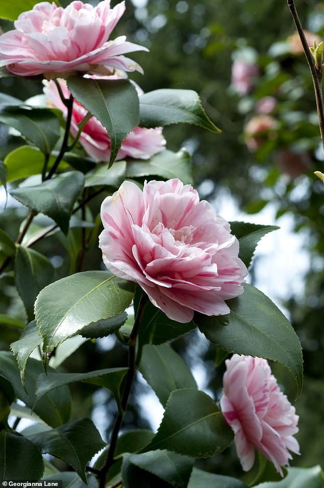 British gardening expert Nigel Colborn advises keen gardeners to prepare their outdoor areas for the colder winter months and pay close attention to shrubs or large plants in outdoor pots