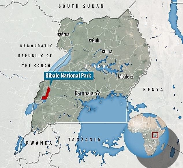 Kibale National Park in southern Uganda is one of the most diverse regions in Africa and home to more than a dozen species of primates