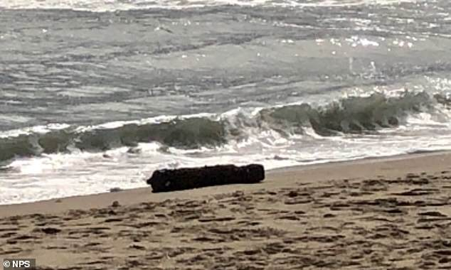 A 100-pound bomb from World War II was discovered on the beach in North Carolina's Outer Banks on October 23. German U-boats frequently targeted the area in 1942, earning it the nickname of 'Torpedo Alley'
