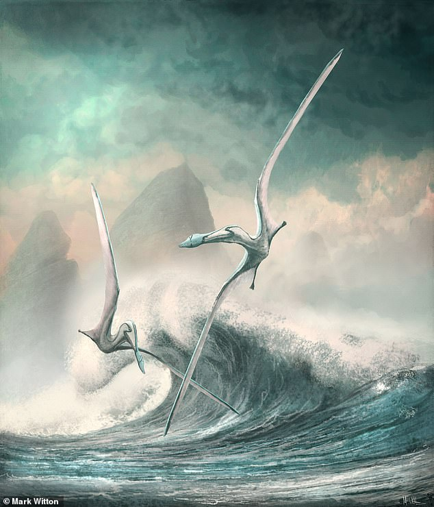 In their study, Professor Venditti and colleagues combined fossil records with a new model of flight, based on today's birds, that allowed them to measure the efficiency of 75 different pterosaurs species and fill in the gaps in our knowledge of their story. Pictured, an artist's impression of twoCimoliopterus — one of the species studied — flying over the ocean