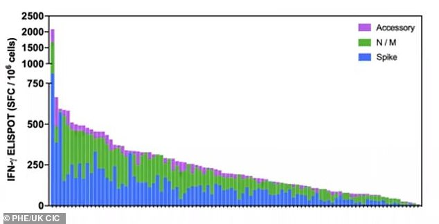 This graph shows the cellular immune response in 100 infected people after six months, The blue bars are level of T cells targeting the viral spike. Blue and purple show other proteins which induce an immune response