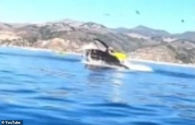 A humpback whale nearly swallowed two women whole when it leaped out of the water into their kayak