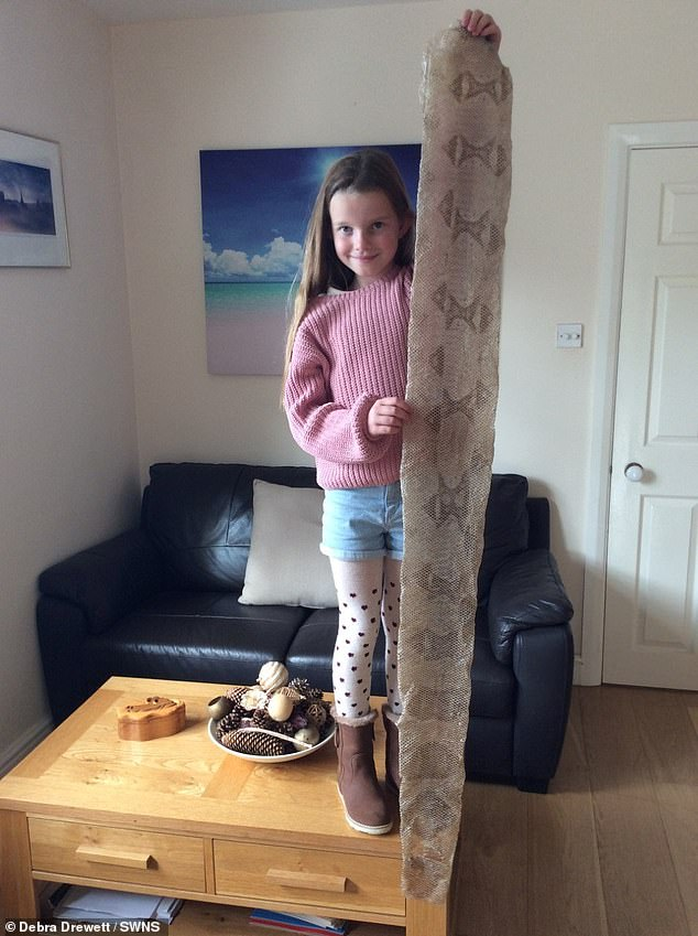 Amelia Drewett pictured with snake skin she found on a walk in Oxford with her grandfather