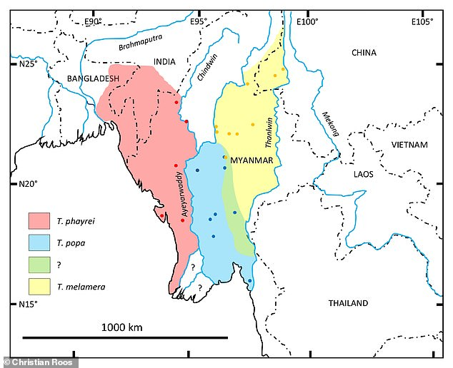 Geographic distribution of the Popa langur (Trachypithecus popa) and the related species Phayre's langur (Trachypithecus phayrei) and Shan langur (Trachypithecus melamera)
