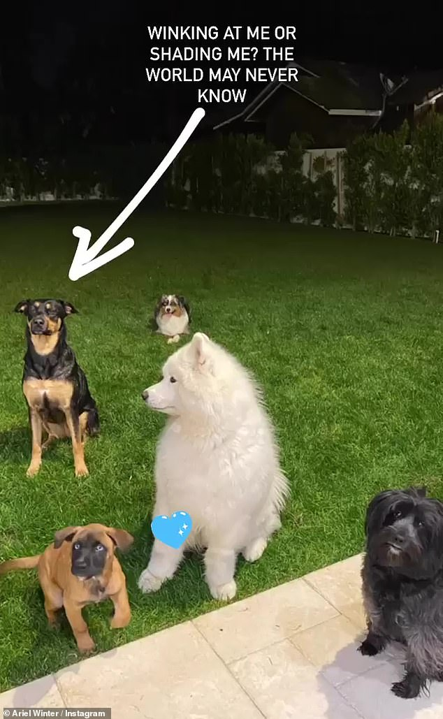 Leader of the pack: The previous night Winter spent some quality time with her five dogs, all while showing off her pack leader skills