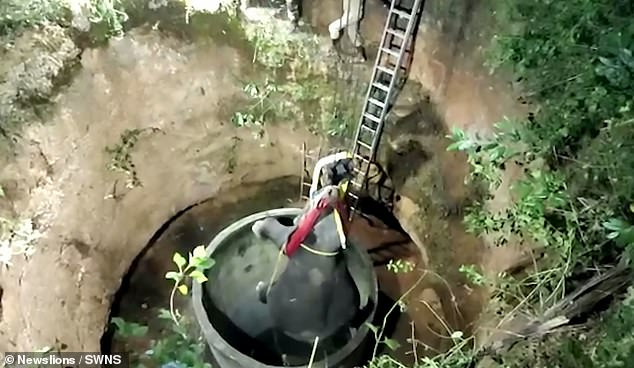 The elephant was rescued after a sixteen hour struggle by a team of wildlife veterinarians led by Dr Prakash