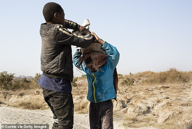 An older boy places a sack of cobalt on Daniel's back. Two thirds of the world supply is located in southern Congo where men, women and children all work