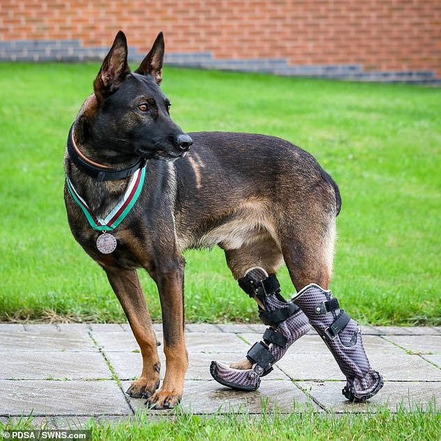 He was shot in both back legs during his act of heroism and suffered life-changing injuries
