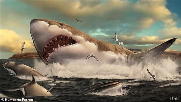 Slow to reproduce, megalodon nurseries likely contributed to the success - and later demise - of this iconic top predator, the authors discovered