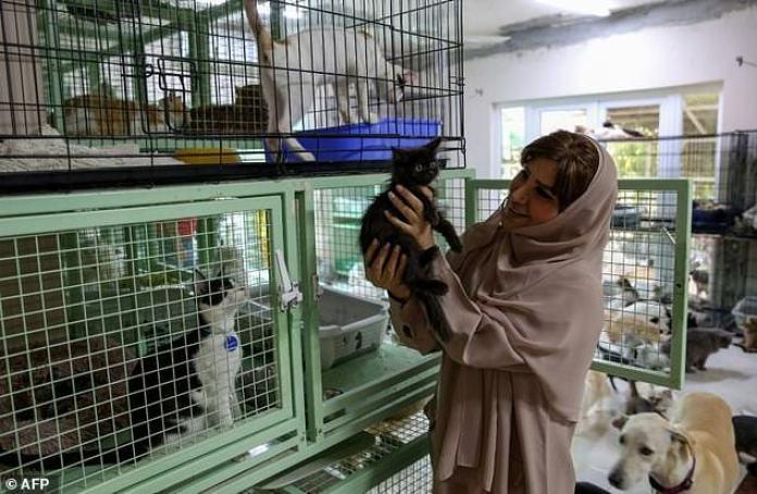 Maryam Al-Balushi Picks Up One Of Her 480 Cats