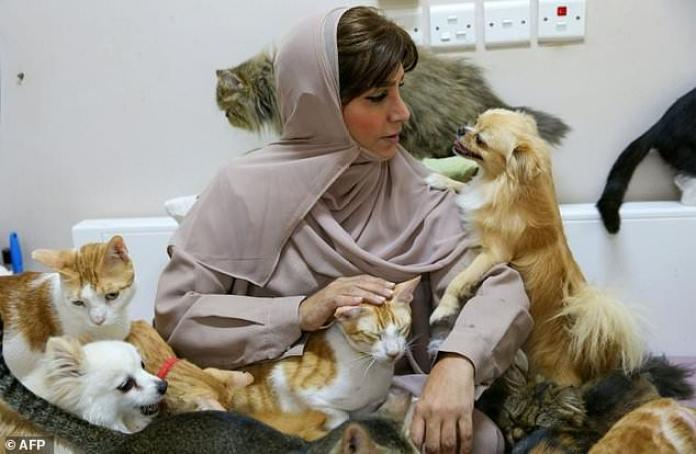 Despite Complaints From Neighbours And Mounting Expense, Omani Maryam Al-Balushi Has Built Up A Menagerie Of 480 Cats And 12 Dogs, Describing Her Pets As Better Companions Than Humans.