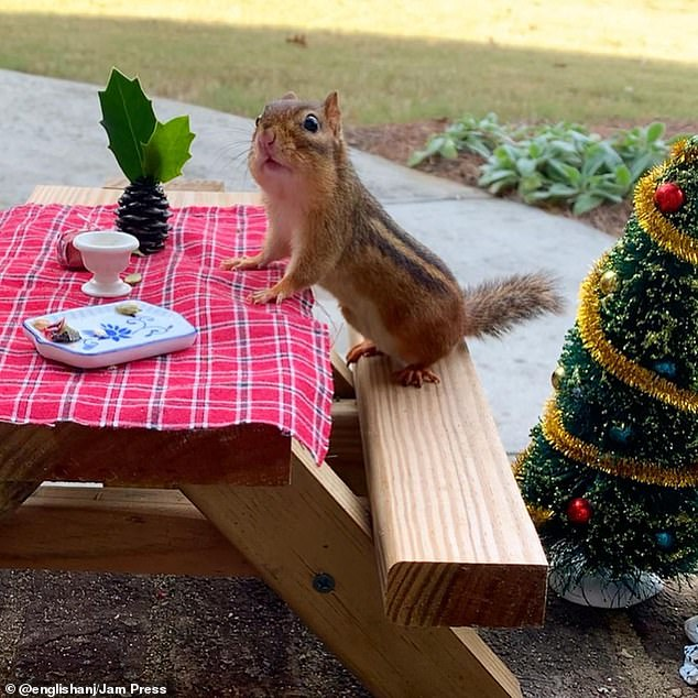 'Tis the season:People recently commented on a festive picture that shows Thelonious Munk at his tiny picnic table, surrounded by Christmas items
