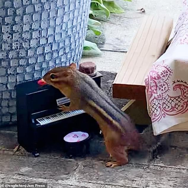 Memories: Angela's friend Brett got her furry friend a piano because they used to go to a jazz night at a sushi restaurant before the pandemic