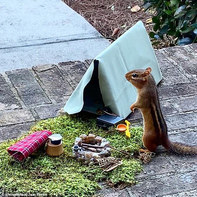 Added touch:Angela also decided to make the chipmunk a campsite because her 'favorite place to hang out is by a campfire'