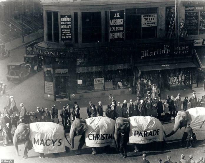 Elephants march single file in the first Macy's Parade in 1924. It was originally called the 'Macy's Christmas Parade' and featured a menagerie of animals that were on loan from the Central Park Zoo: elephants, monkeys, camels, tigers and bears on loan from the Central Park Zoo marched between floats alongside brass bands and Macy's employees who were costumed as clowns, cowboys, jesters and sword-wielding knights