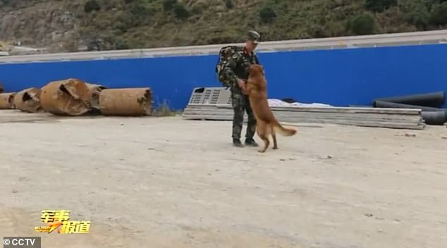 As the Chinese soldier prepared to leave the camp, the officer bid an emotional farewell with the three-year-old golden retriever Da Mao, the first search and rescue dog he had trained
