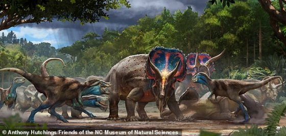 Pictured is an artist's depiction of fighting Tyrannosaurus rex and Triceratops horridus.  Dinosaurs were wiped out by a mass extinction event about 66 million years ago