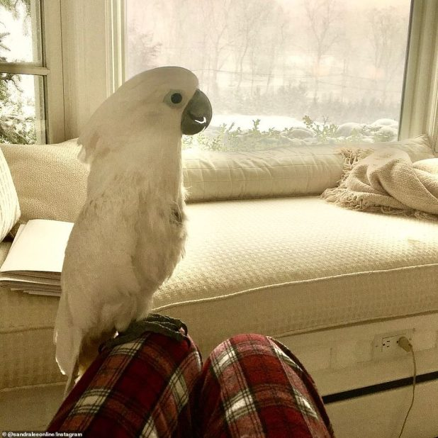 Staying comfortable and warm: Lee named his white cockatoo with Phoenix inside Mt.  Kisco Home