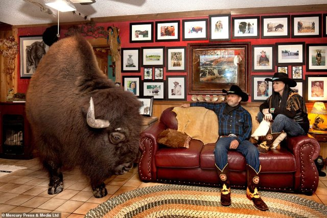 R.C. Bridges, 63, and his wife Sherron, 47, let a 2,500lb buffalo named Wild Thing roam around their Texas home