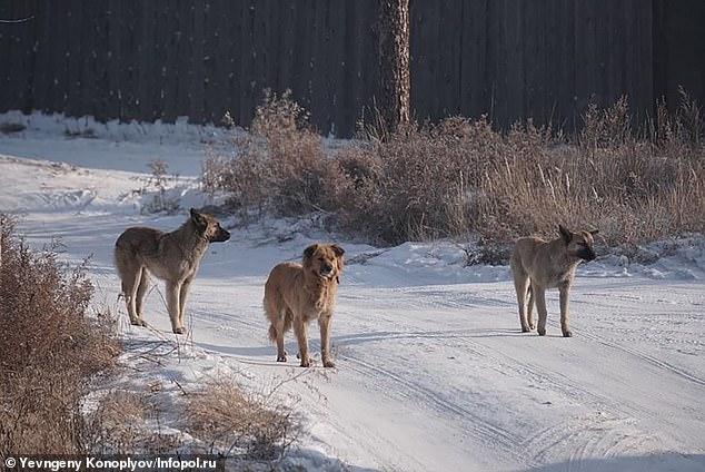 В общей сложности 10 собак, предположительно виновных в нападении, были застрелены (на снимке дикие собаки возле места нападения).