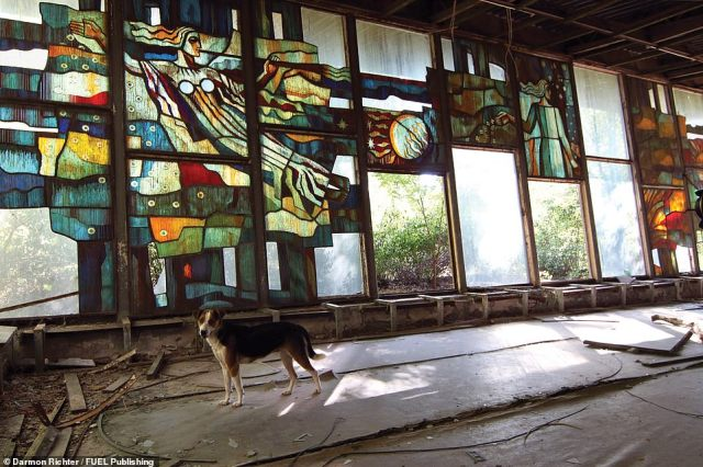 Pripyat Café: This building and its striking stained-glass windows are currently being preserved by a privately funded project. The city is still home to numerous stray dogs, descendants of pets left by evacuees, who are often fed by tourists