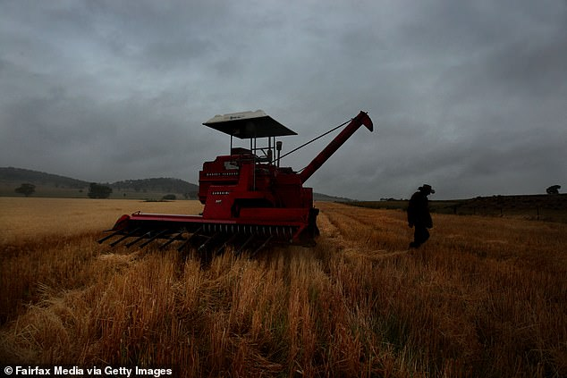China makes up only 10 per cent of national wheat exports but the industry is one of a handful said to have been affected by the growing Beijing-Canberra trade dispute. Pictured is a farmer in a paddock near Dunedoo in central NSW