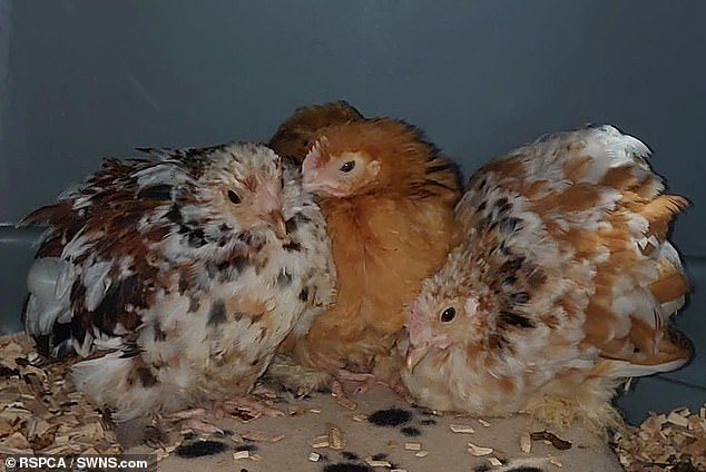 The RSPCA fears more owners will abandon their pets as the cases of bird flu rise in the country