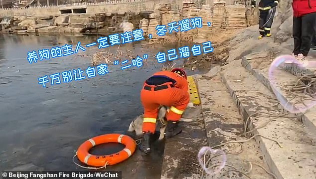 After considering the depth of the water, the officers decided to save the animal by throwing a life buoy, strapped to a rope, towards the husky instead of directly walking into the lake