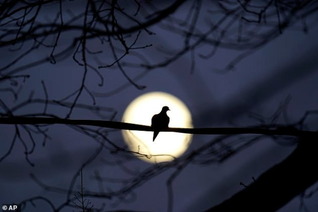 The surname comes from the Native American tribe Mohawk and as temperatures drop in December, winter arrives.  Picture is a full moon hanging over Maryland