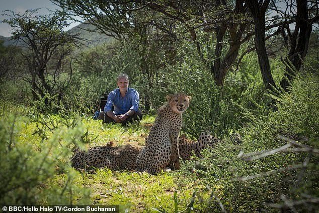 Cameraman Gordon Buchanan with gets to know some big cats in Cheetah Family and Me (BBC2)