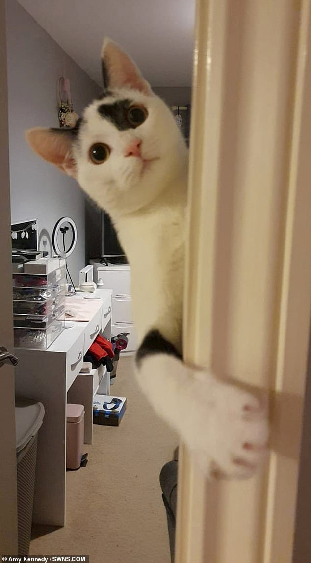 Amy lay in wait and filmed the canny cat leaping into the air, wrapping his paws around the handle, before pulling it down (pictured)