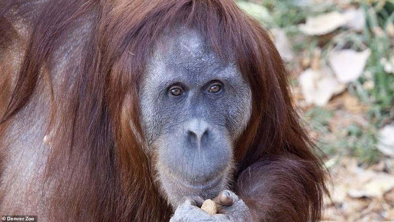 The update came nearly a month after Cerah's mother, Nias (pictured), died unexpectedly at the age of 32 on December 17