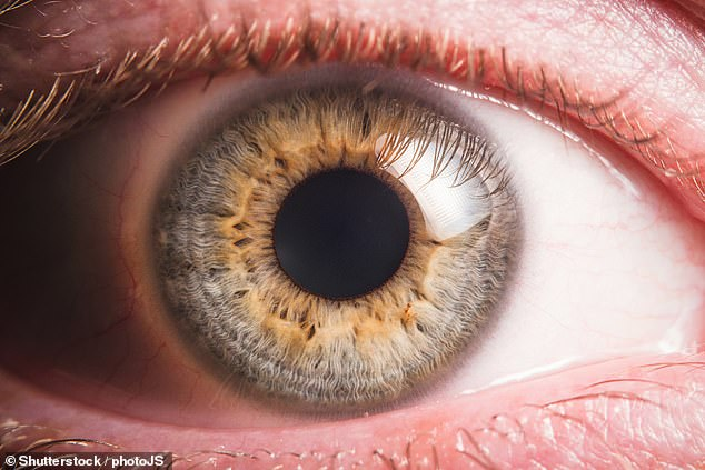 Retinal stem cells harvested from the eyes of corpses could be used to cure blindness for millions of people around the world, a study has proposed (stock image)