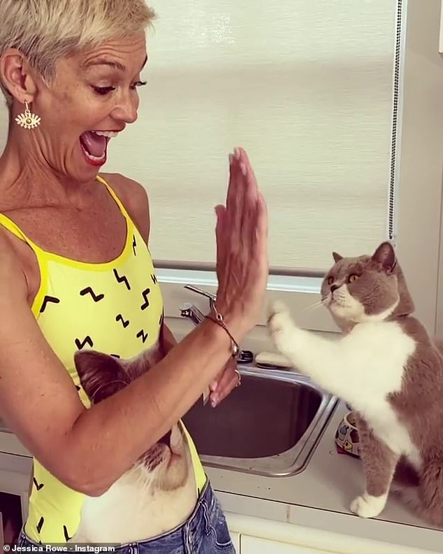 Happy Cat Day!  On Monday, Jessica Rowe (left) celebrated her cat Violet (right) was four years old - and the former Studio 10 host went out of her way to throw the lucky moggie on a lavish birthday, which she documented on her Instagram