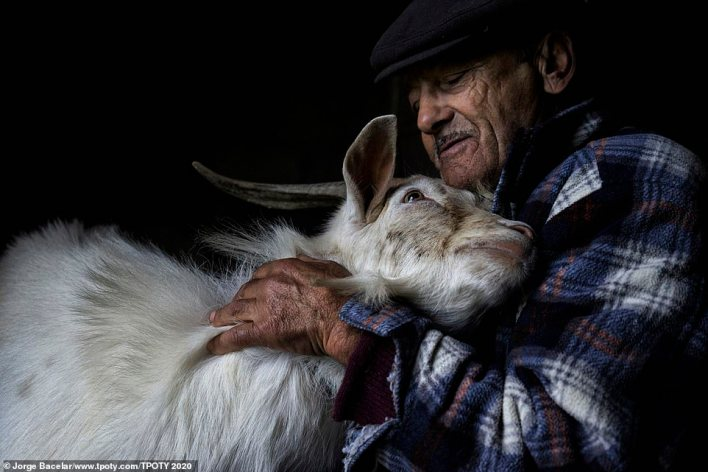 Silver in the competition's 'people of the world' portfolio category went to Jorge Bacelar, from Portugal. This heartwarming image was part of his entry and it was also the winner of the 'people's choice award'. It shows Abilio Carteirista, a farmer in Murtosa, Portugal. Bacelar said: 'Now over 80 years old, he spends much of his time in the stable taking care of his animals'
