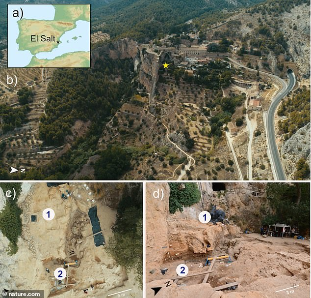 The ancient fecal sediments were uncovered at the El Salt site in Space where many Neanderthals once lived before dying out some 40,000 years ago. And the samples are the oldest fecal material discovered to date.