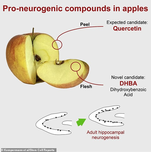 Two compounds - quercetin in apple peel and dihydroxybezoic acid (DHBA) in apple flesh - generated neurons in the brains of mice in lab tests