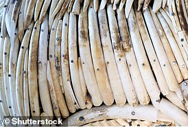 Trade of elephant ivory (pictured) is illegal