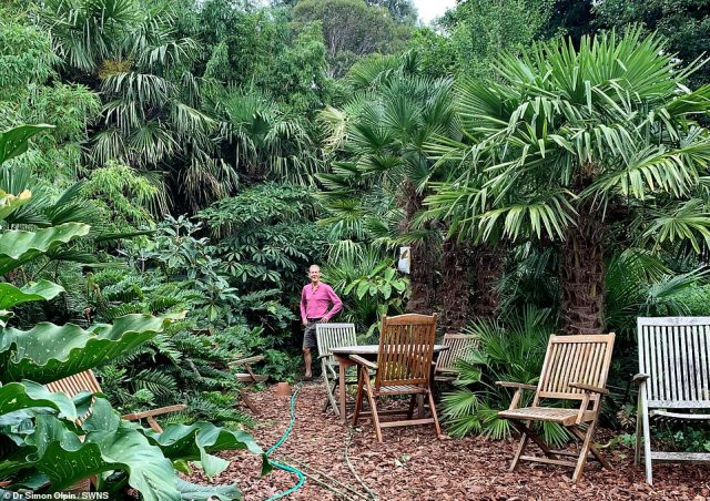 Mr Olpin said his fear of flying meant he was never been able to travel the world and see any jungles so instead decided to make one in his back garden